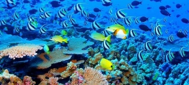coralreef.jpg